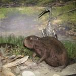 Wycieczka do Muzeum Przyrodniczego